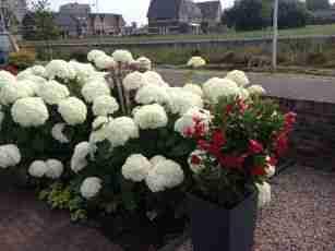 Hovenier Apeldoorn en Vaassen BK Tuinen ontwerp aanleg onderhoudfoto (3)
