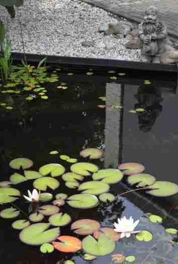 Vijver aan laten leggen Apeldoorn hoveniersbedrijf BK Tuinen vijver met vissen