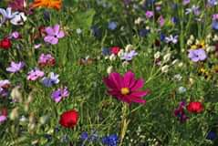 Elke plant heeft eigen voorkeuren, zoals veel of weinig zon en veel of weinig ruimte. Maar daarnaast heb jij natuurlijk ook jouw ideeën. Misschien wil