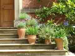 Ga je op vakantie en staan er planten in terracotta potten? Terracotta neemt veel water op. Plaats de potten dan op bakstenen in een bak met een laagj