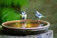 In deze periode kunnen jouw planten zeker water gebruiken, maar vergeet daarnaast niet de vogels! Voor de natuur zijn vogels erg nuttig, denk aan het