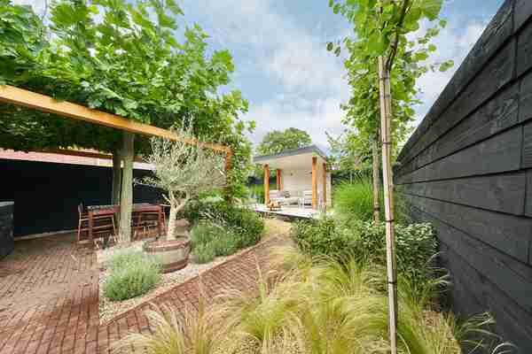 plataan boompjes in een strakke tuin