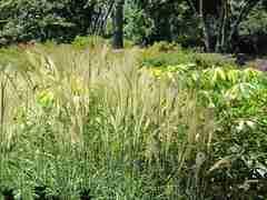 In september en oktober kan je perfect siergrassen planten. Deze zijn mooi in de tuin voor de herfst en wintertijd.