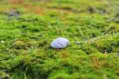 Mos groeit onverminderd door, ook wanneer grasgroei stil ligt. Als jij in het najaar jouw mos ongemoeid laat kan het snel uitbreiden.
