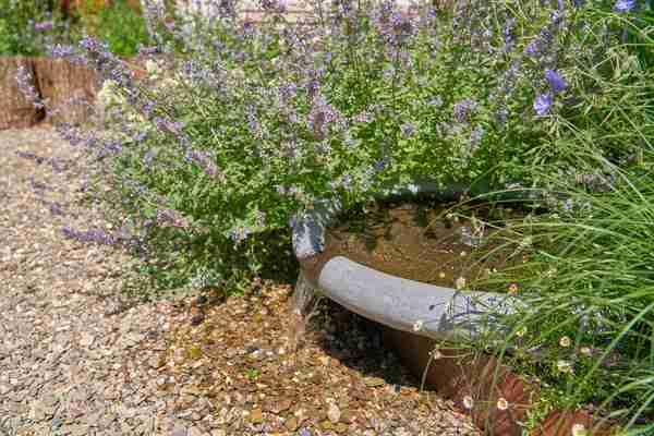 lavendels in de tuin