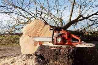 Staan er grote bomen in de tuin en is drastische snoei nodig of moet een boom het veld ruimen, laat deze klus dan nu uitvoeren. Dit is een goed mome